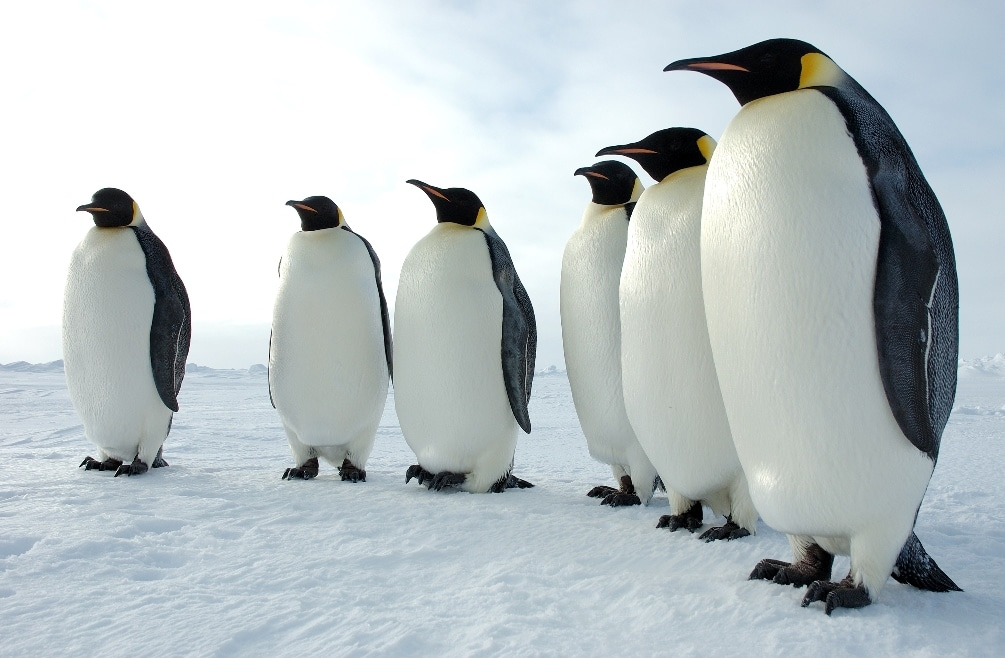"Here are some other users of the term ""Penguin"""